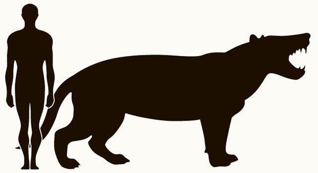 Loài động vật có vú ăn thịt lớn nhất trên đất liền, được mệnh danh là máy xay thịt di động