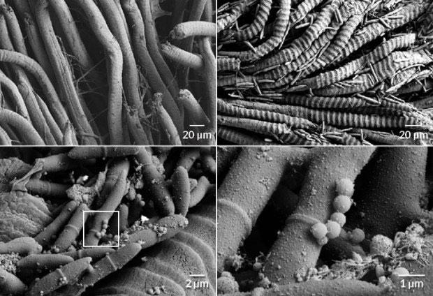 Loài nấm sát thủ ký sinh khiến kiến chết dần chết mòn trong đau đớn