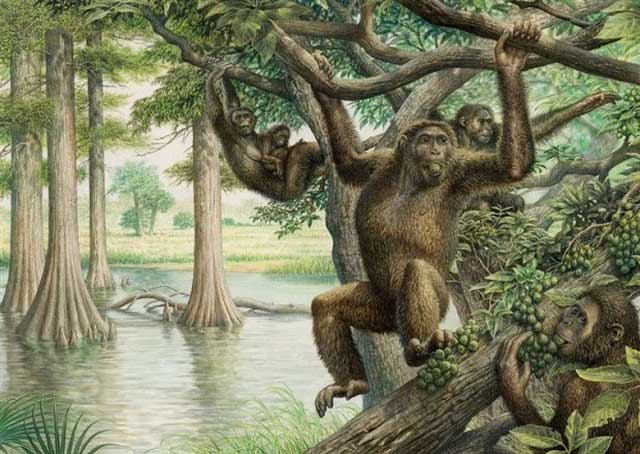 Loài người sơ khai cũng ăn chay và đu mình giữa các cành cây
