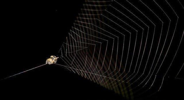 """Loài nhện """"súng cao su"""" kỳ lạ có tốc độ nhanh gấp 100 lần báo săn"""