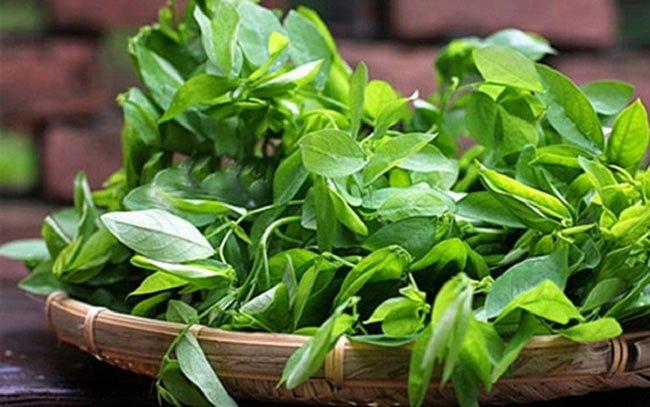 Loại rau được coi là thảo dược quý trị dứt điểm 6 căn bệnh, tốt hơn nhiều loại thuốc bổ
