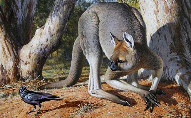 Loài thú có túi lớn nhất từng tồn tại trên Trái đất