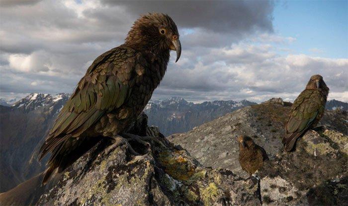 Loài vẹt có khả năng cân nhắc rủi ro để đưa ra quyết định