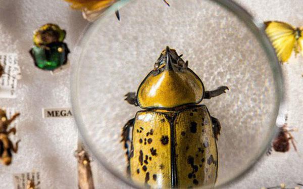 Lượng côn trùng trên thế giới suy giảm, ảnh hưởngtiêu cực đến môi trường toàn cầu