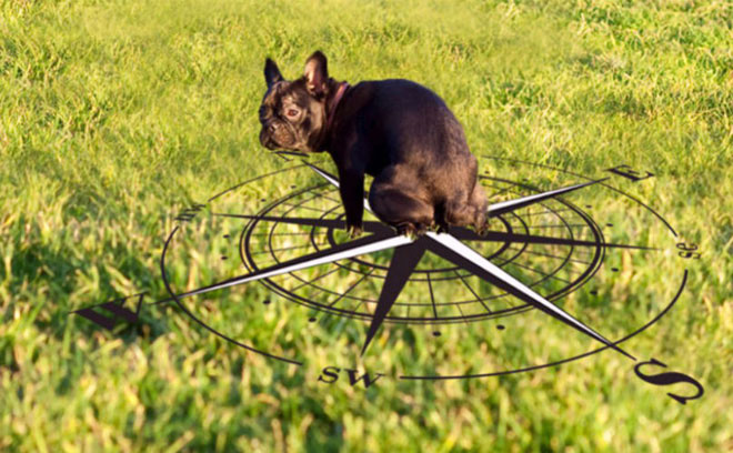 Lý giải bí ẩn trong hội sen: Tại sao các boss chó luôn xoay lòng vòng trước khi đi cầu?