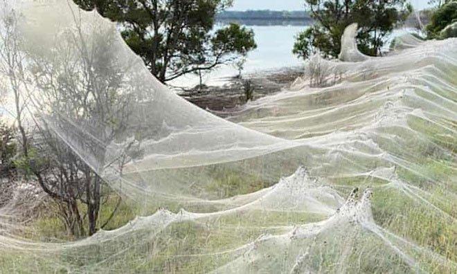 Mạng nhện khổng lồ xuất hiện ở Australia