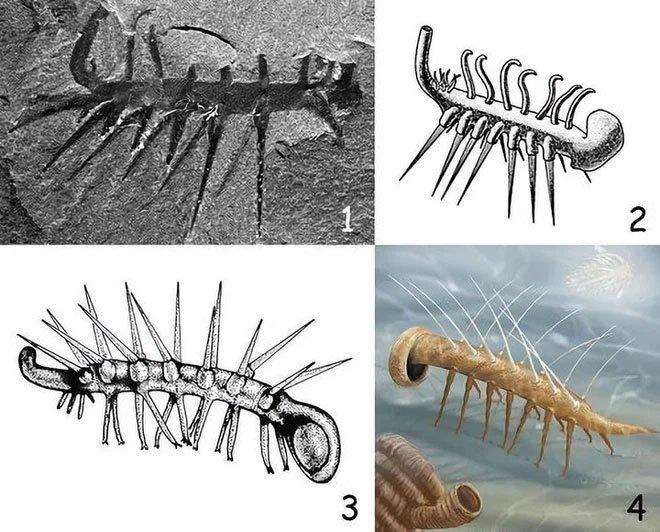 Mất tới 24 năm, giới khoa học mới có thể phân biệt được đâu là đầu và đâu là đuôi của con vật này!