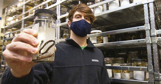 Mẫu vật tiết lộ loài rắn mới có ít đốt sống nhất