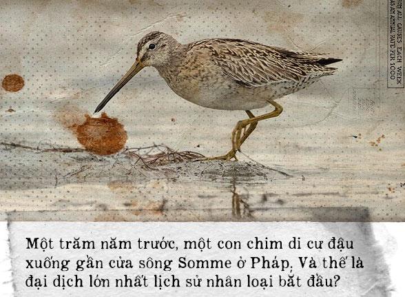 Một con chim đậu xuống cửa sông mở đầu đại dịch giết chết 50 triệu người