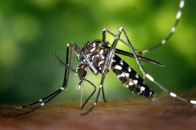 Muỗi hút máu bợm nhậu thì có bị say không?