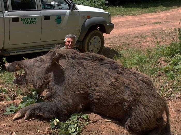 Mỹ đau đầu vì bom hẹn giờ siêu lợn rừng bắn mãi không hết