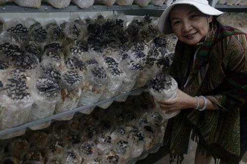 Nấm bào ngư lần đầu sản xuất quy mô công nghiệp ở Việt Nam