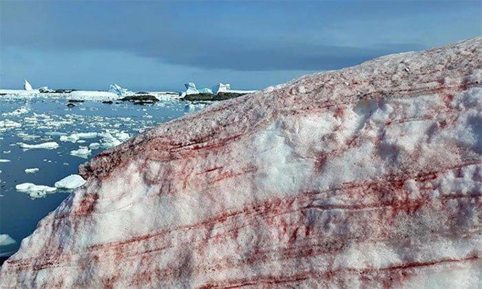 Nam Cực bất ngờ xuất hiện tuyết dưa hấu
