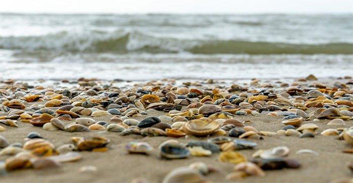 Nắng nóng luộc chín hàng trăm ngàn con trai, vẹm ven biển