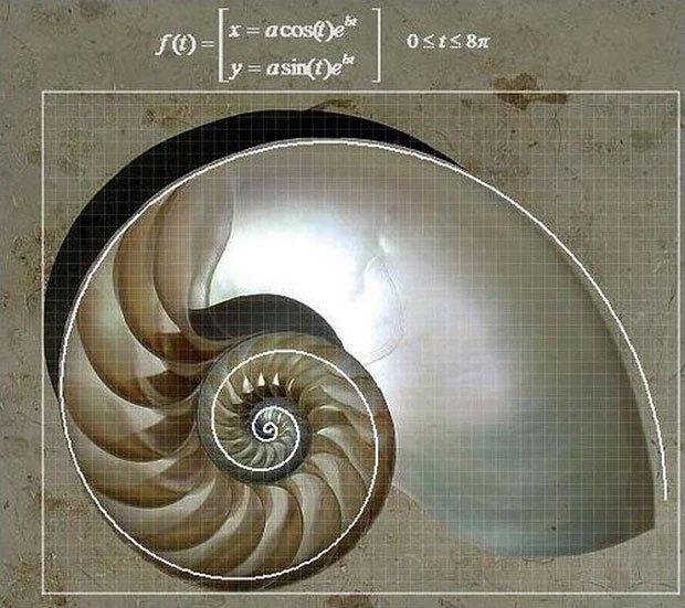 Nếu bạn mọc sừng trên đầu, khoa học nói nó sẽ dài ra theo hàm mũ logarit
