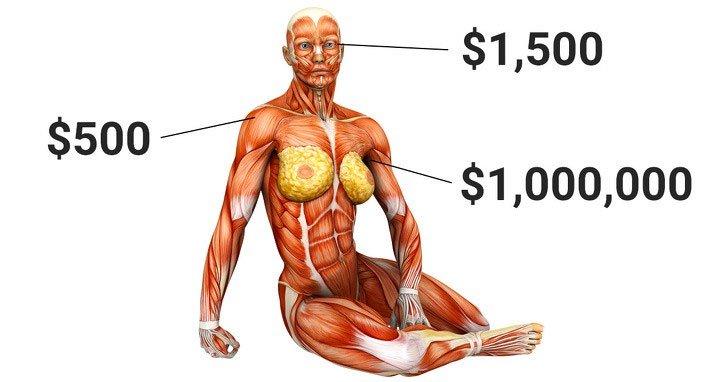 Nếu có thể thoải mái thay thế nội tạng bị hỏng, liệu con người có trở nên bất tử?