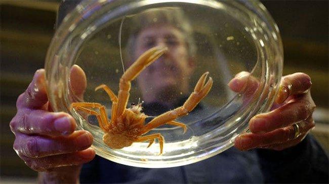 Ngày càng nhiều sinh vật lạ dạt bờ - xu hướng này nguy hiểm hơn bạn tưởng