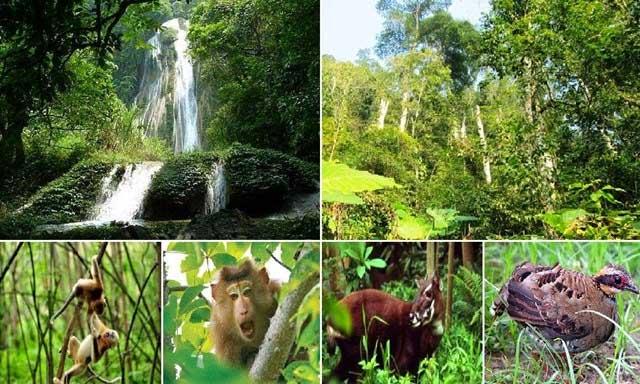 Ngày Quốc tế đa dạng sinh học 22/5: Chung tay bảo tồn đa dạng sinh học vì tương lai bền vững