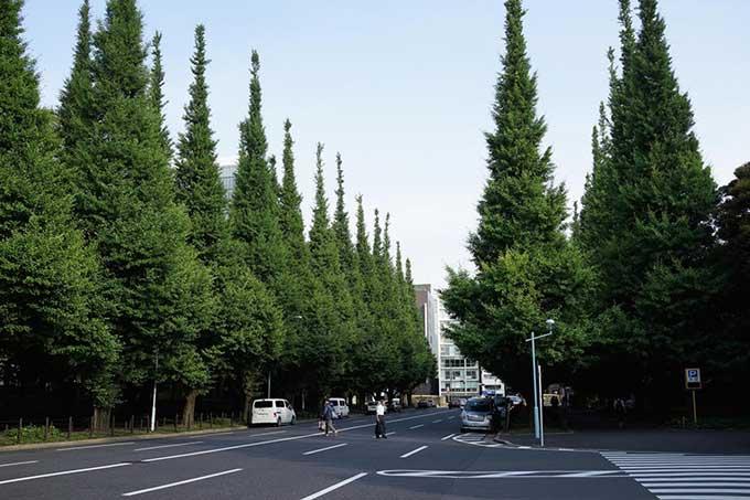 Nghiên cứu mới cho thấy: Cây thông hấp thụ tiếng ồn hiệu quả nhất