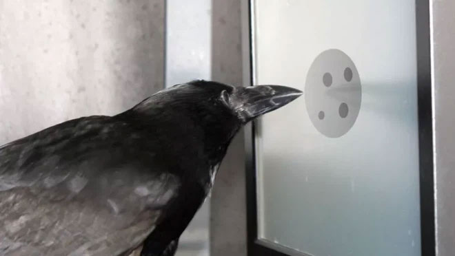Nghiên cứu mới cho thấy quạ cũng hiểu được khái niệm số 0