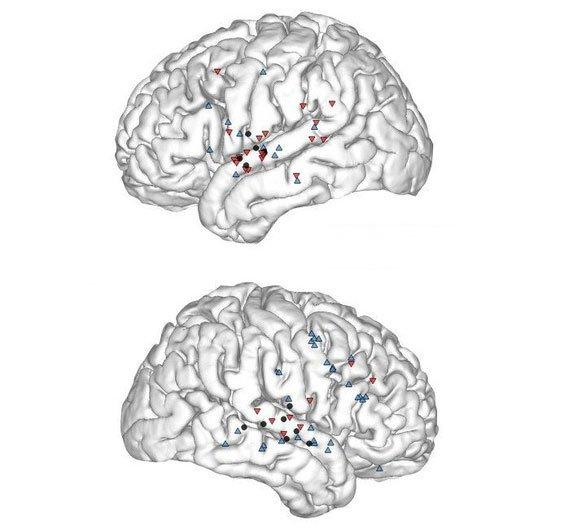 Nghiên cứu mới lý giải vì sao càng lớn càng khó học ngoại ngữ