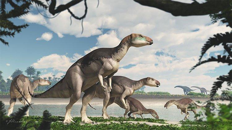 Ngọc mắt mèo hình thành từ xương khủng long cổ đại ở Australia
