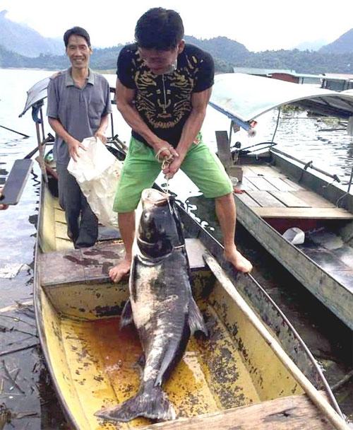 Ngư dân bắt thủy quái siêu to khổng lồ ở hồ Tuyên Quang