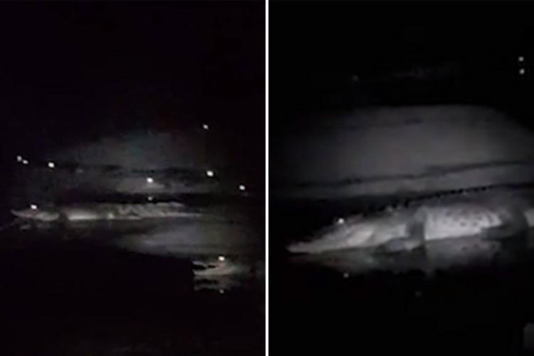 Ngư dân bị cả trăm con cá sấu bao vây trong đêm tối