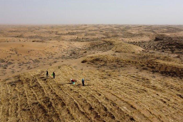 Người đàn ông suốt 20 năm chiến đấu với sa mạc Gobi