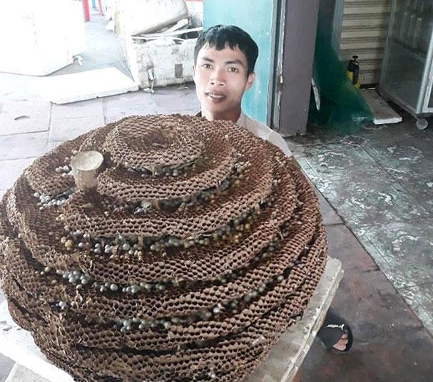 """Người dân săn được tổ ong """"khủng"""" 10 tầng ở biên giới Nghệ An - Lào"""