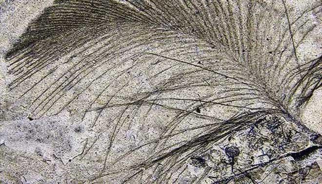 Nguồn gốc của lông vũ có thể sớm hơn nhưng gì chúng ta vẫn biết và cũng không liên quan gì đến việc bay