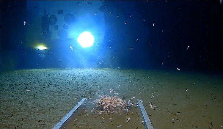 Nhà thám hiểm Mỹ lặn xuống rãnh đại dương sâu nhất thế giới