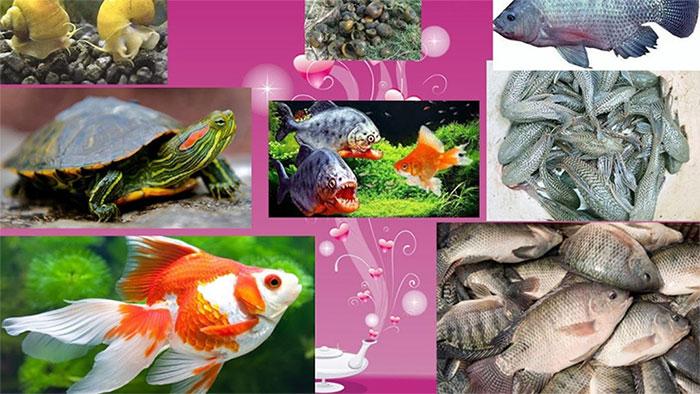 Nhận diện rõ sinh vật ngoại lai
