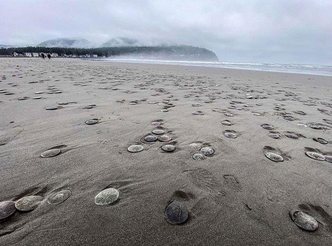 Nhím biển dẹt chết hàng loạt do triềudâng