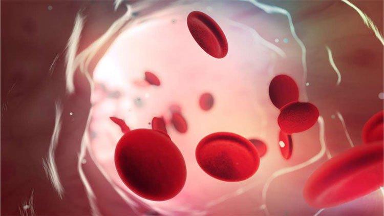 Nhóm máu duy nhất có thể tự động kháng lại căn bệnh giết chết cả triệu người mỗi năm