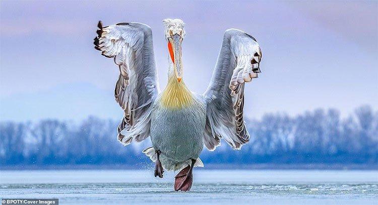 Những bức ảnh đẹp nhất đạt giải cuộc thi Nhiếp ảnh gia chim muông 2019
