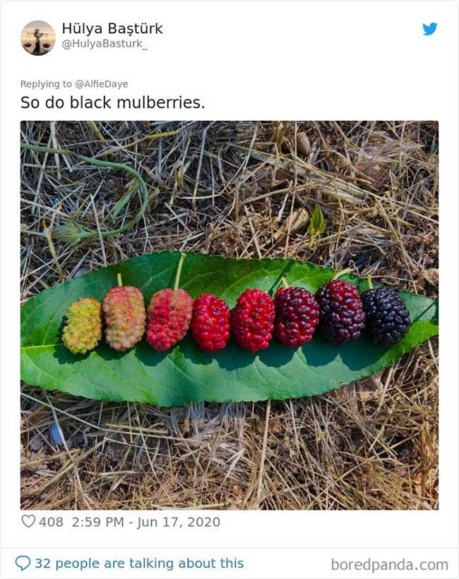 Những bức ảnh sinh động và tuyệt đẹp về vòng đời của sinh vật