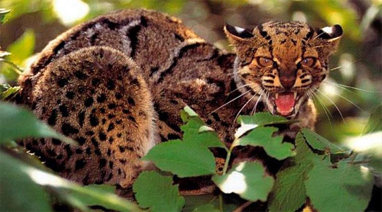 Những chiến thuật săn mồi kỳ dị nhưng đặc biệt hiệu quả trong thế giới tự nhiên
