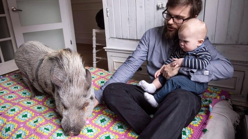 Những chú lợn cưng oách nhất mạng xã hội