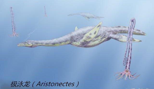 Những con thằn lằn cổ rắn thời tiền sử có khả năng lặn tương tự với cá nhà táng hiện đại