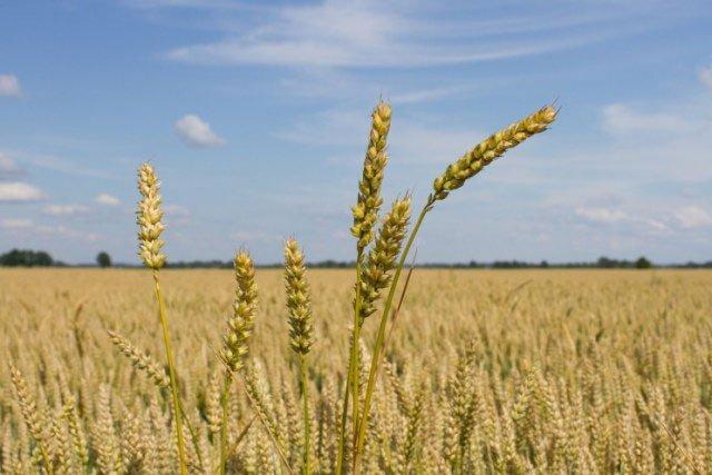 Những công nghệ chống hạn hán trong nông nghiệp đáng chú ý