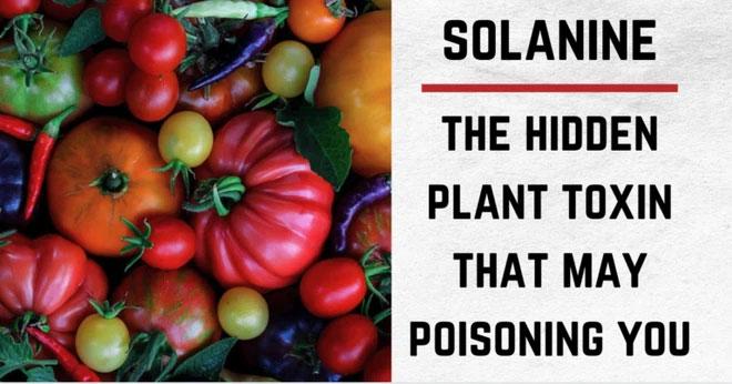 Những điều bạn chưa biết về khoai tây: Có họ hàng với cà chua, cà tím và nhiều cây có độc