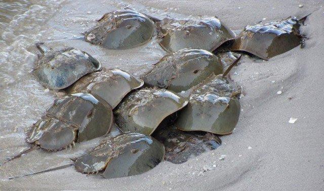 Những điều thú vị về con sam biển
