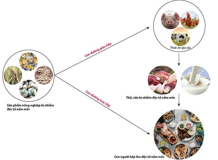 Những độc tố nấm mốc trong thực phẩm gây ung thư