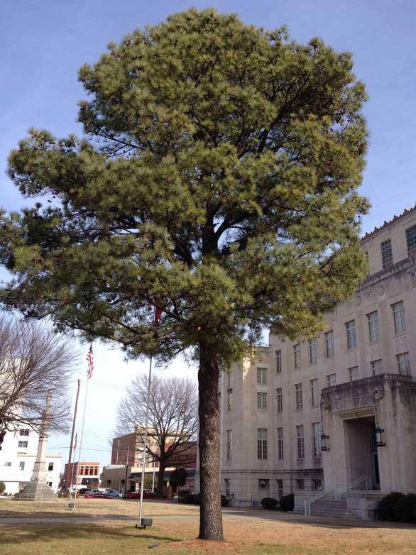 Những giống cây từng lên Mặt trăng giờ ra sao?