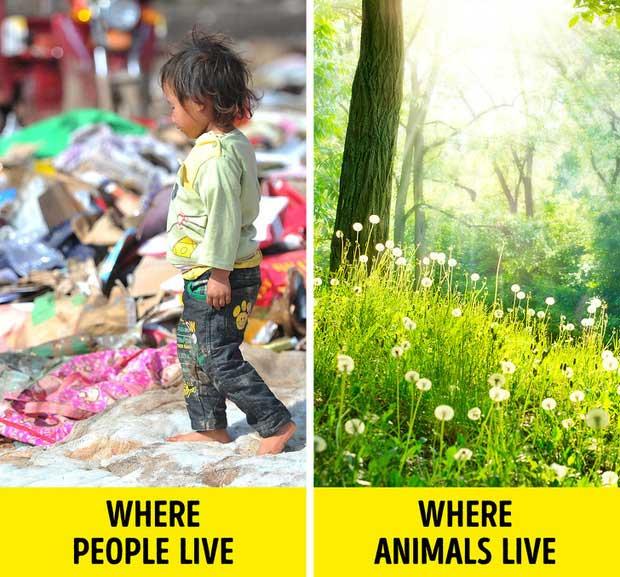 Những hình ảnh cho thấy con người đã quá tàn nhẫn với thế giới này và tàn nhẫn với chính mình