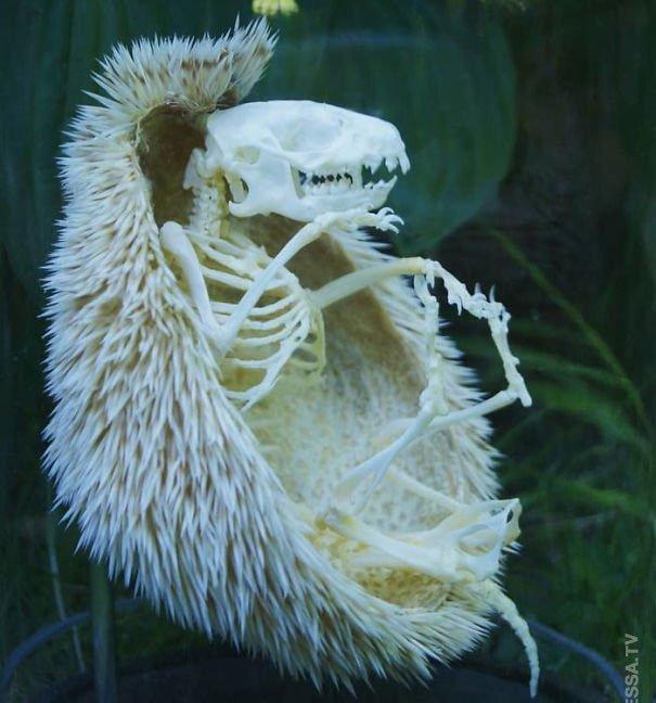 Những hình ảnh có thật trong tự nhiên có thể làm bạn giật mình vì sợ