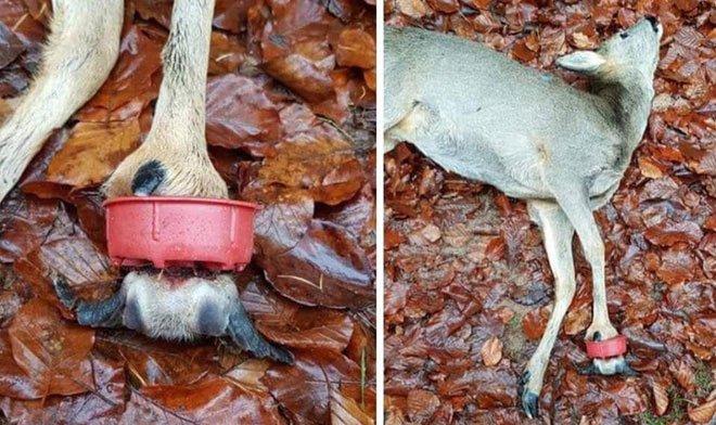 Những hình ảnh gây sốc về hậu quả của rác thải nhựa, ô nhiễm môi trường với thế giới tự nhiên