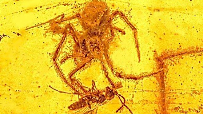 Những hóa thạch hổ phách kỳ lạ nhất từng được phát hiện