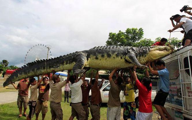 Những kẻ khổng lồ trong thế giới động vật